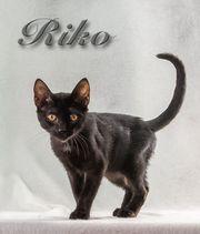 Riko möchte Ihr Herz erobern