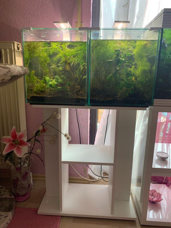 2 Aquarien mit Unterschrank Pflanzen
