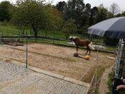 Pferde Besitzerin sucht die etwas