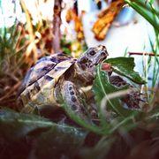 Ich werde Schildkröten kaufen THB