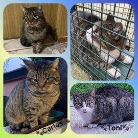 Streuner Kater Carlos und Toni 2 J. kastriert wünschen sich ein Zuhause!!!