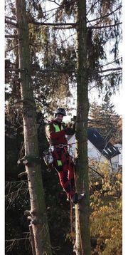 Baumfällungen Rückschnitt Baumpflege Sturmschäden
