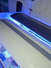 Meerwasser GIesemann Aora Hybrid weiß