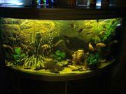 Juwel 3D Aquarium Motivrückwand Root