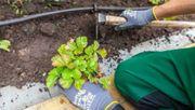 Professionelle Pflege für Ihren Garten