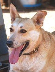 Anny - verträgliches menschenbezogenes kinderliebes Hundemädchen