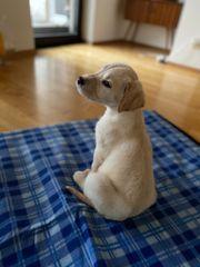 Labrador - Welpe reinrassig