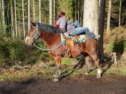 Rudi Barockes Freizeitpferd -Therapie geeignet
