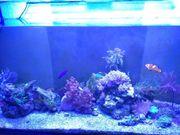 Meerwasser Aquarium 300l