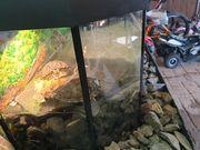 Wasserschildkröten abzugeben