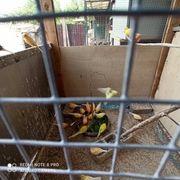 Kanarienvogel Und Welensitiche Zum Verkaufen