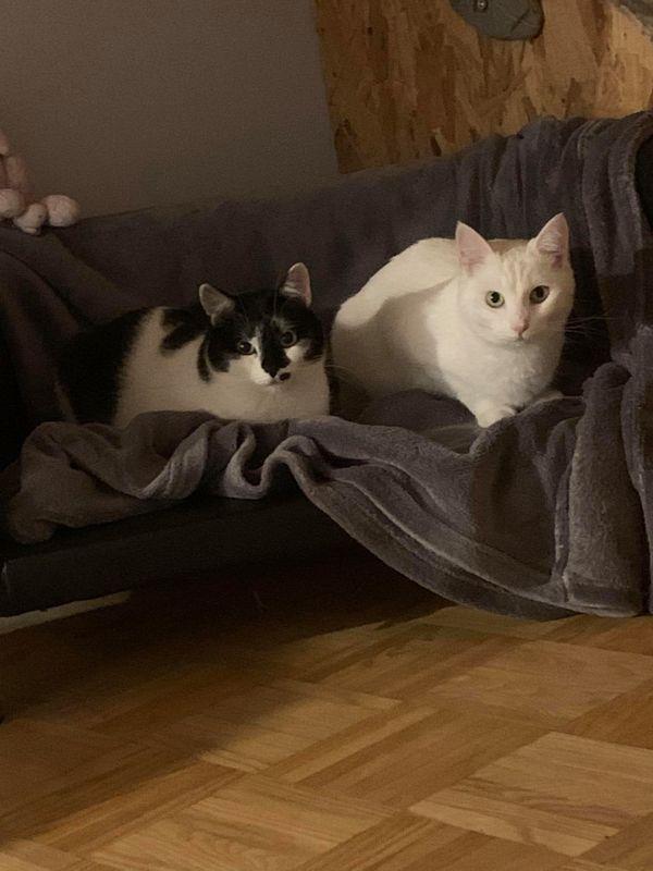 Zuhause für Anastasia und Olga