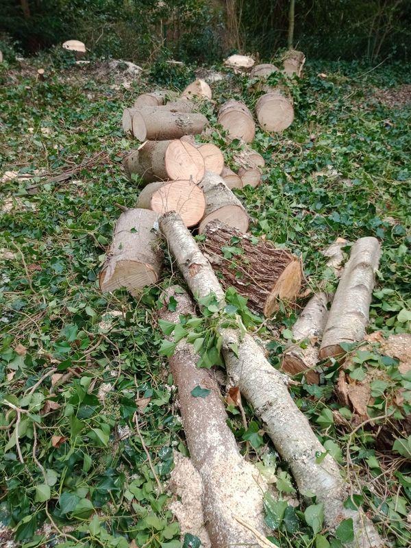 Feuerholz Brennholz ca 7 bis