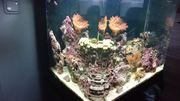 Meerwasser Aquarium RedSea 130 Liter