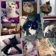 Katzenbetreuung Kleintierbetreuung