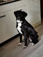 Hundedame und Sohn 5 Monate