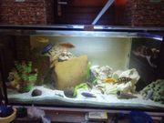 300l Aquarium