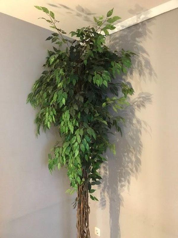 Kunstbaum Ficus ca 240cm gebraucht