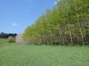 Suche Feld Wiese Acker Garten