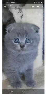 süße Katzenbabys