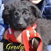 Gerda - Traum-Welpe sucht eine Familie