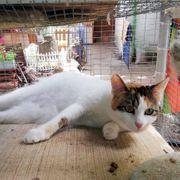 Katzenmädchen Kalinda sucht Dich