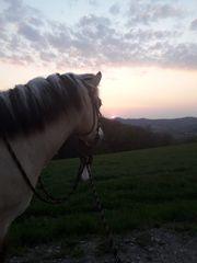Hof zur Pferdehaltung gesucht