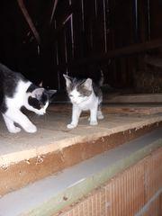 Katzenkinder suchen liebevolles Zuhause