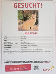 Kater aus Berlin-Kladow vermisst
