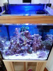 Meerwasseraquarium 50er würfel komplett