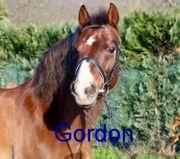 Drei liebenswerte Ponys suchen ein