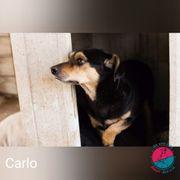 Carlo - Braucht einen erfahrenen und