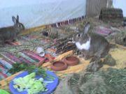 2 Kaninchen suchen neues liebevolles