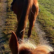 Pferde Betreuung Reitstunden
