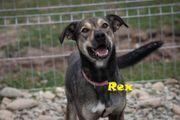 Rex Rüde aus dem Tierschutz