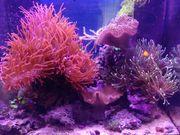 Meerwasseraquarium Aquarium Juwel Lido 120