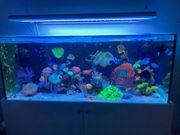 Aquarium wird aufgelöst