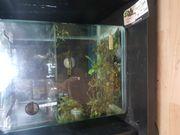 Aquarium 10l
