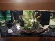 Dreikielschildkröte mit Aquarium