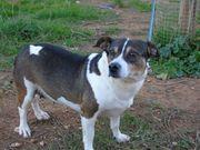 DRINGEND Lola12 ältere Hundedame sucht