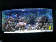 350 Liter Meerwasseraquarium Trigon komplett
