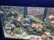 Inhalt Meerwasseraquarium