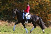 Stallhilfe Pferdepfleger in Adelsdorf