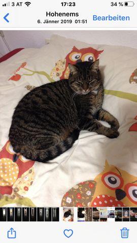 Tiger-Katze entlaufen: Kleinanzeigen aus Hohenems - Rubrik Entlaufen, Entflogen