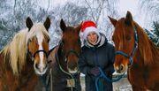 Zeit mit Pferden Reitmöglichkeit Pflegebeteiligung
