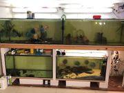 Aquarien 4 Stück TOP Zustand