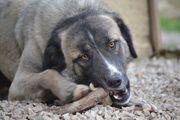 Aileen - freundliches unkompliziertes Hundemädchen