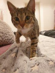 Katze sucht ein liebevolles neues