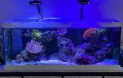 Meerwasser Aquarium komplett mit Inhalt