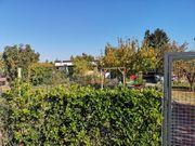kleingarten in MANNHEIM